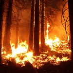 What Should You Know About Arson In Washington State?
